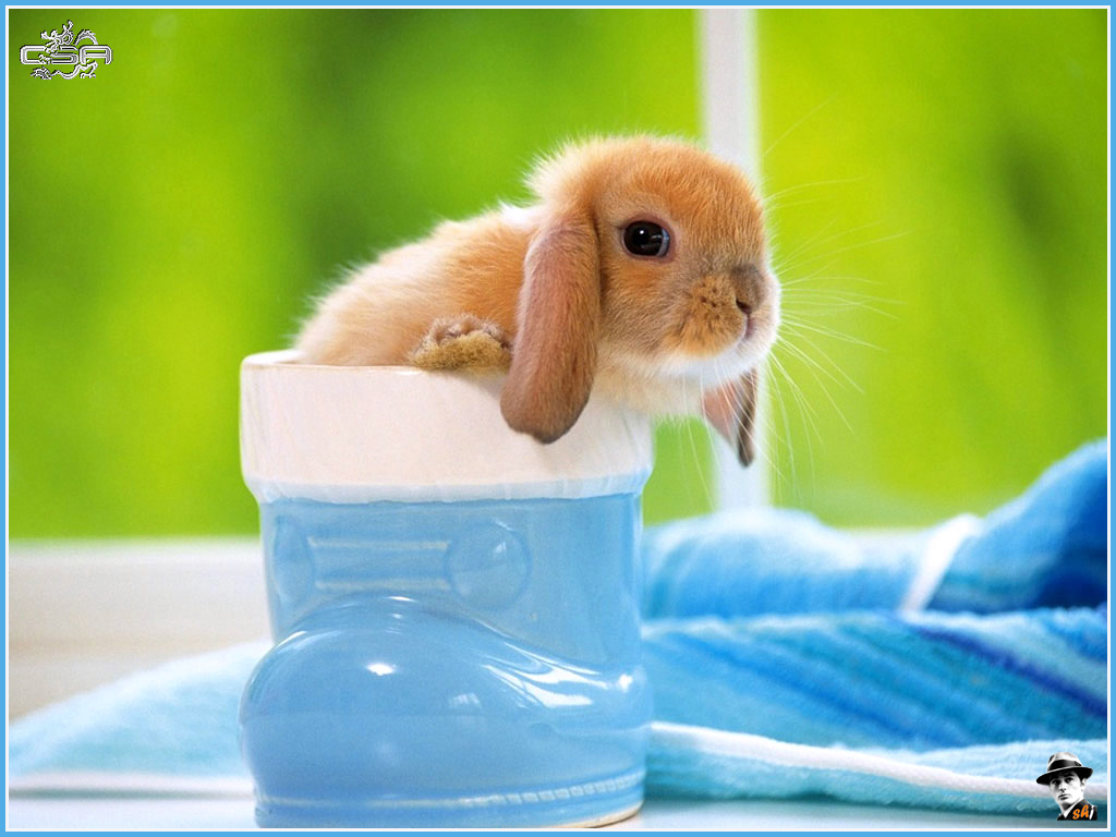 Rabbits Wallpapers Download Free Rabbit 05 Wallpapers